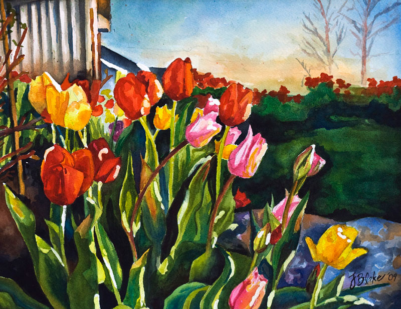 """Holly's Tulip Garden,"" watercolor, 11"" x 14"""