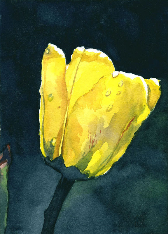 """Yellow Tulip,"" watercolor, 8"" x 10"""